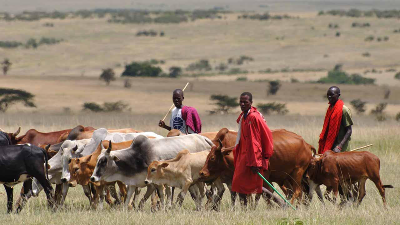 Ebonyi Monarch Decries Destruction Of Farmlands By Herdsmen