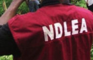 NDLEA Arrest 250 Suspects, Seize Drugs In Delta