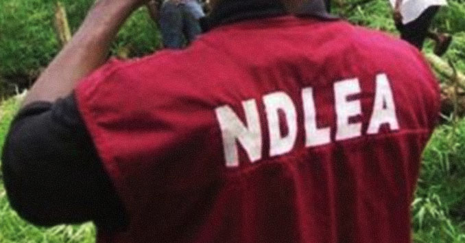 Traffickers excreted 119 wraps of known, unknown drugs –NDLEA